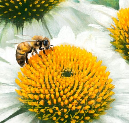 Echinacea with bees